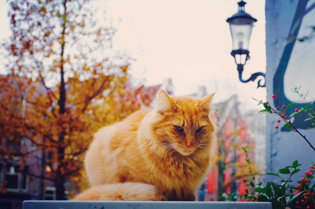 Cat in Amsterdam