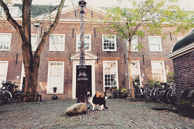 cat in Amsterdam2